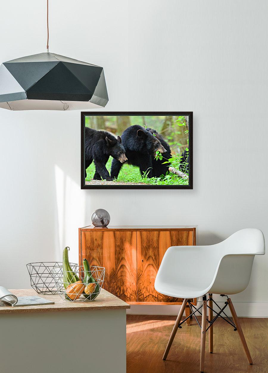 3541- Black bear  Art
