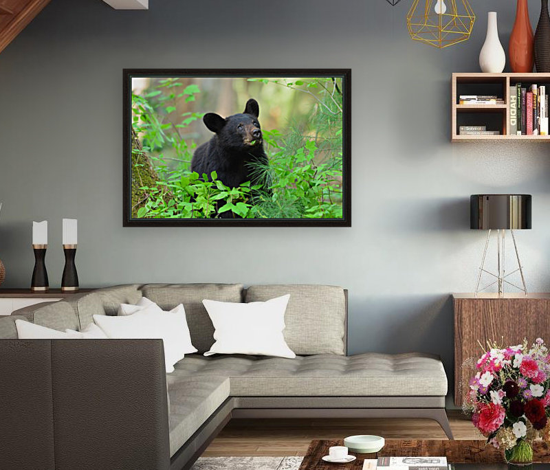 3597-Black Bear  Art