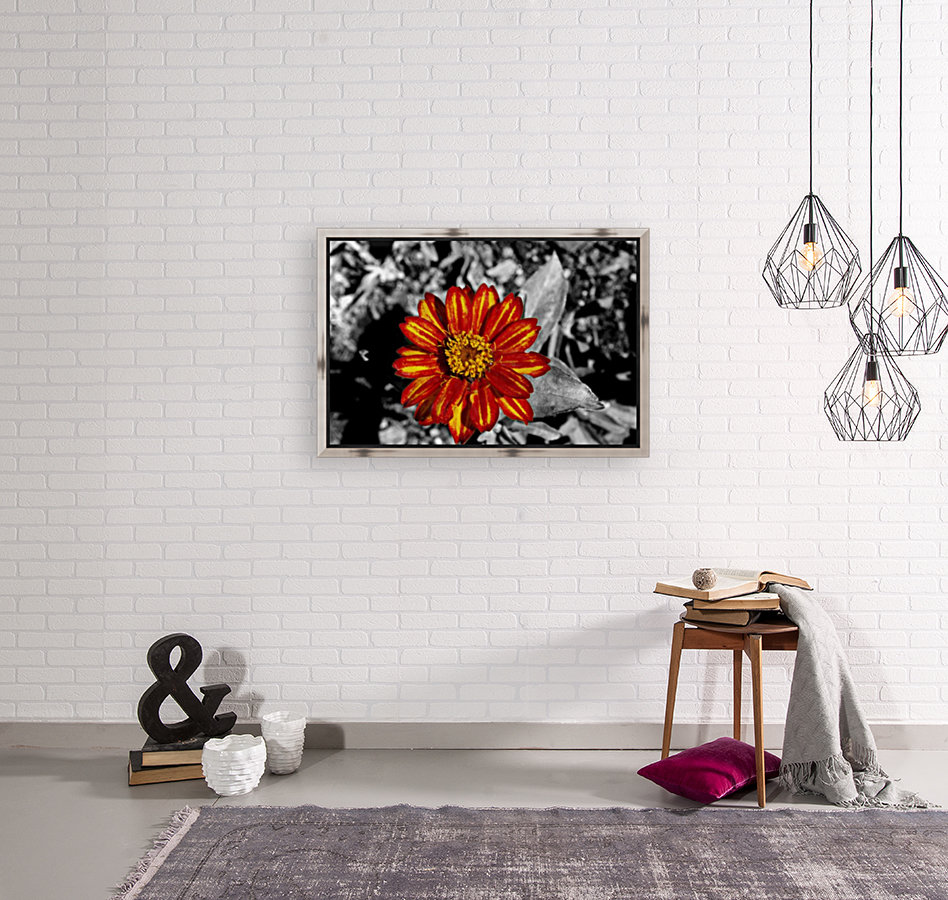 Red Flower with Floating Frame
