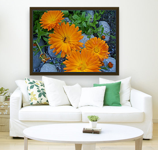 Orange Daisies & Bee with Floating Frame