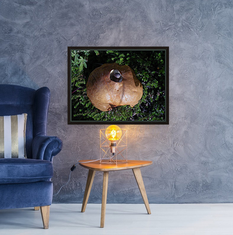 Mushroom with Floating Frame