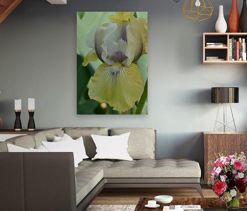 Yellow Iris Photograph  Art