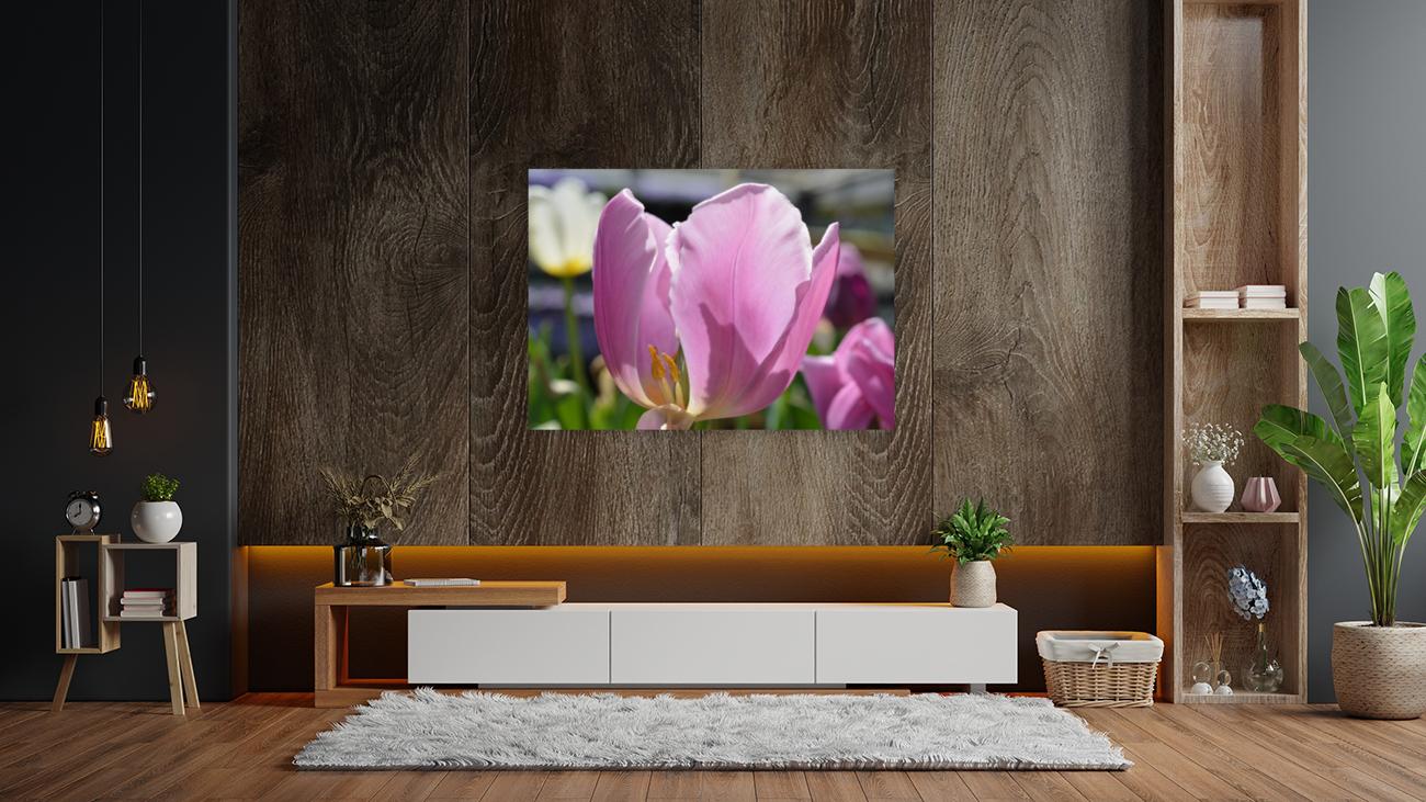 Purple Tulip Photograph  Art