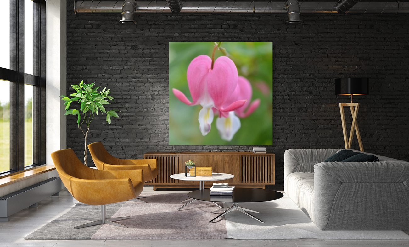 Bleeding Heart Flower Photograph  Art