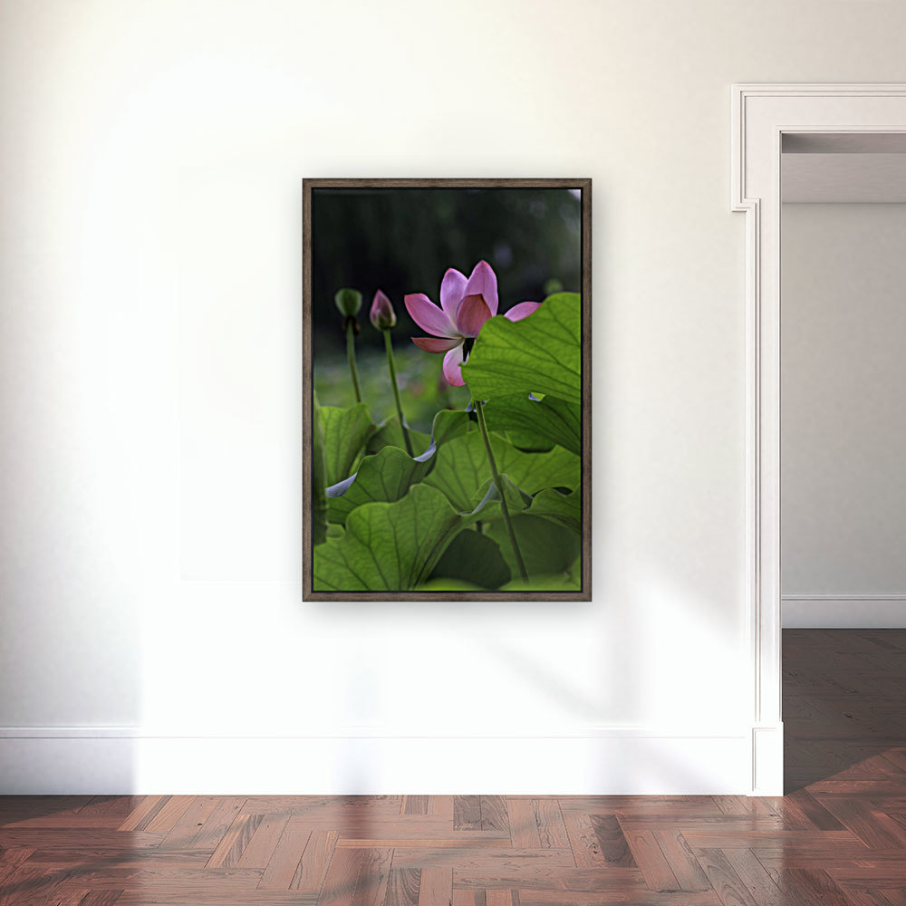 Lotus with Floating Frame