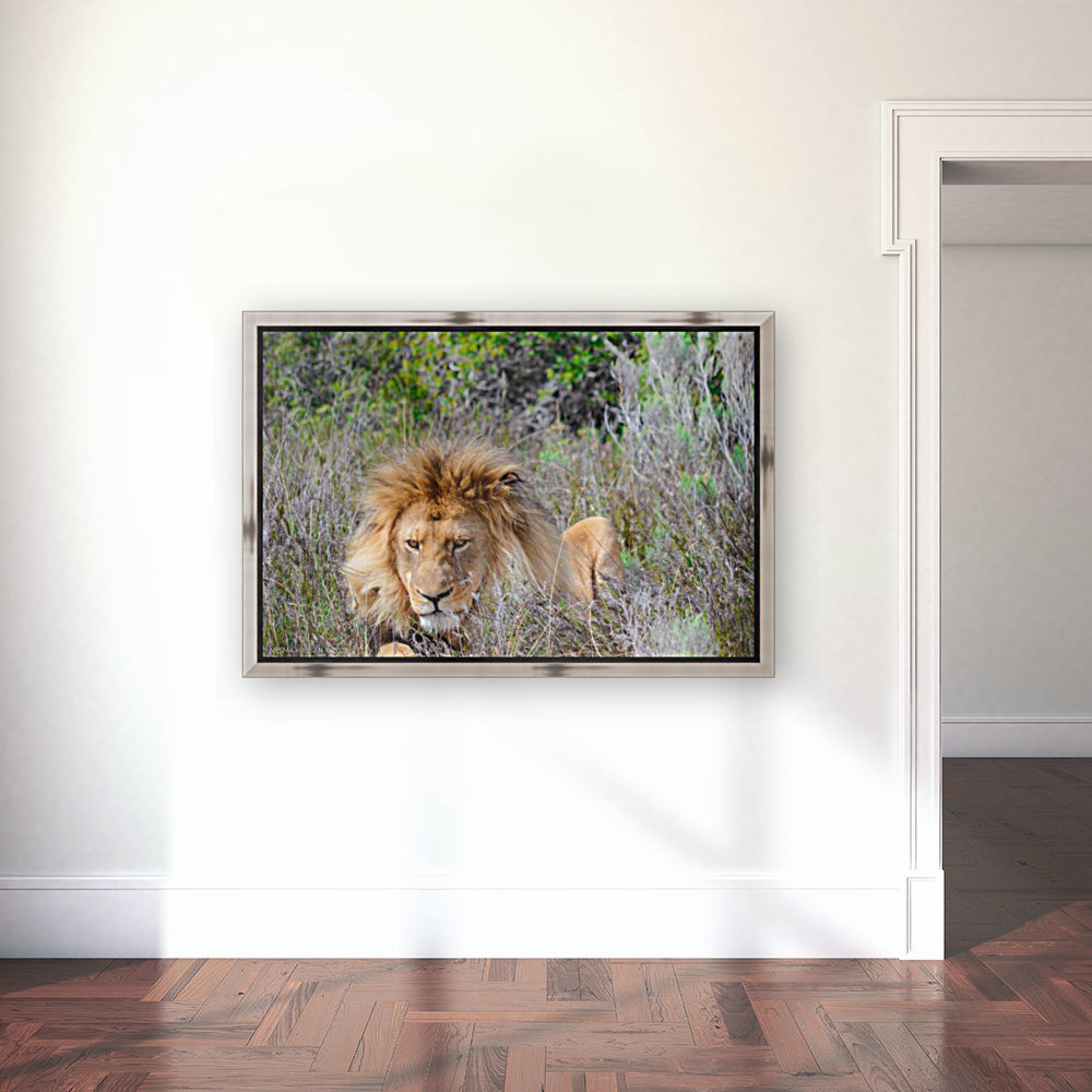 King of the Jungle  Art