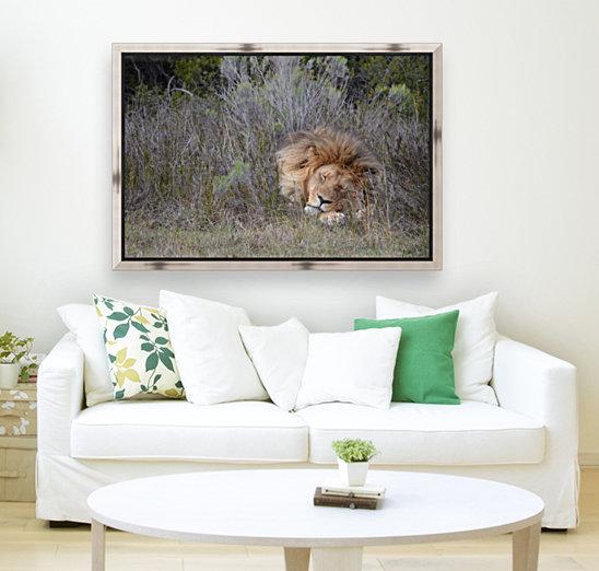 The Lion Sleeps Tonight  Art
