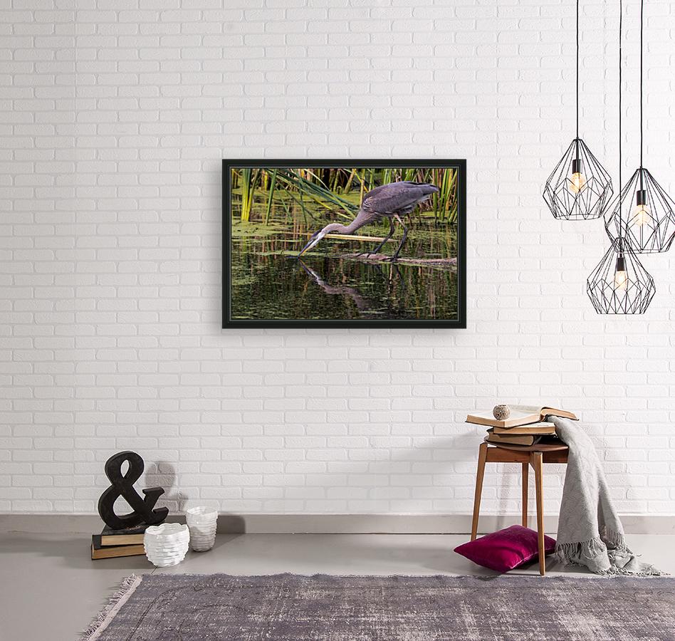 Great Blue Heron taking a Sip  Art