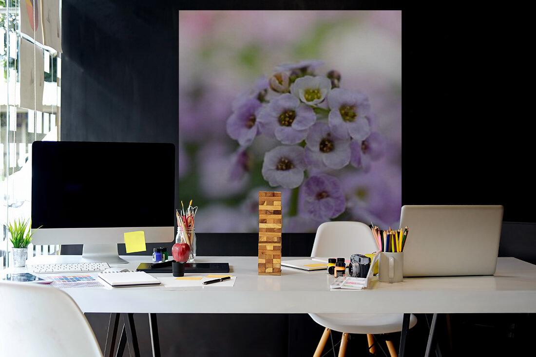 Small Purple White Flower Photograph  Art