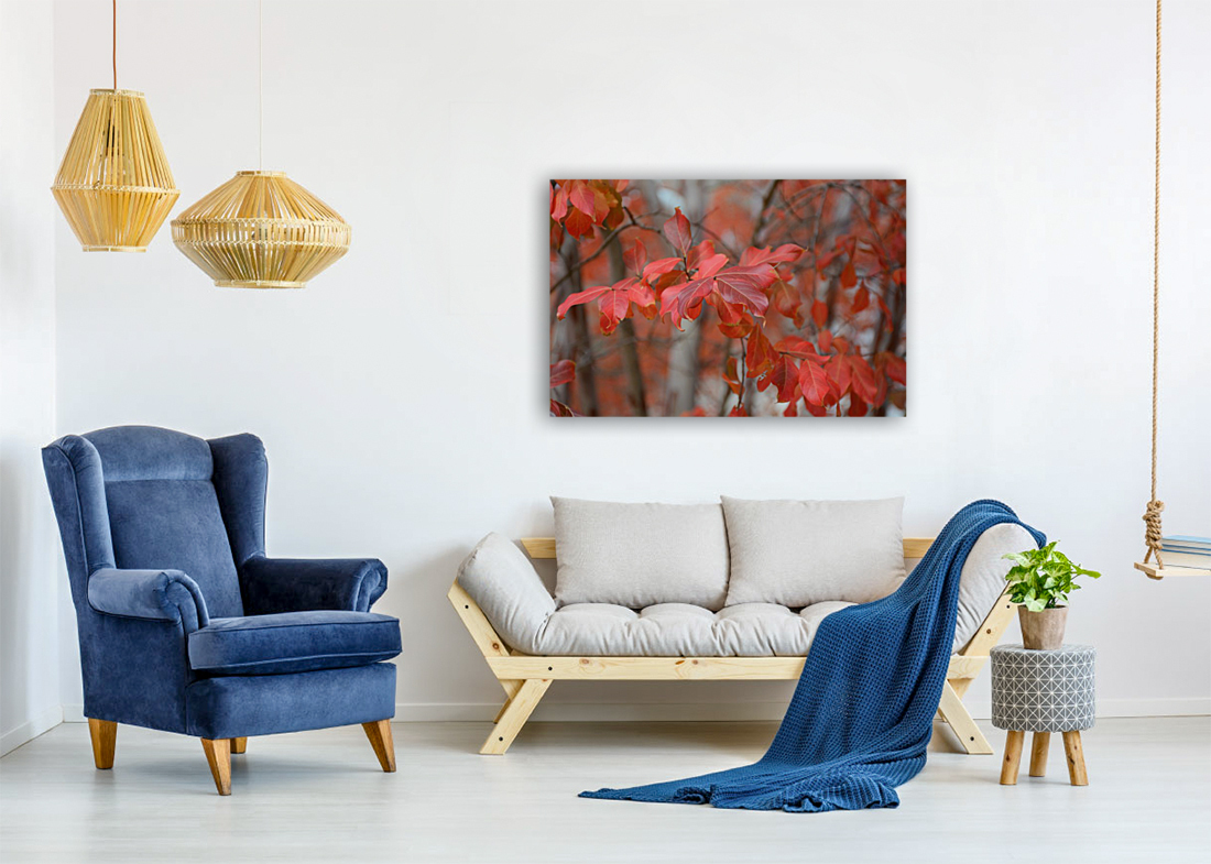 Fall Foliage Photograph with Floating Frame