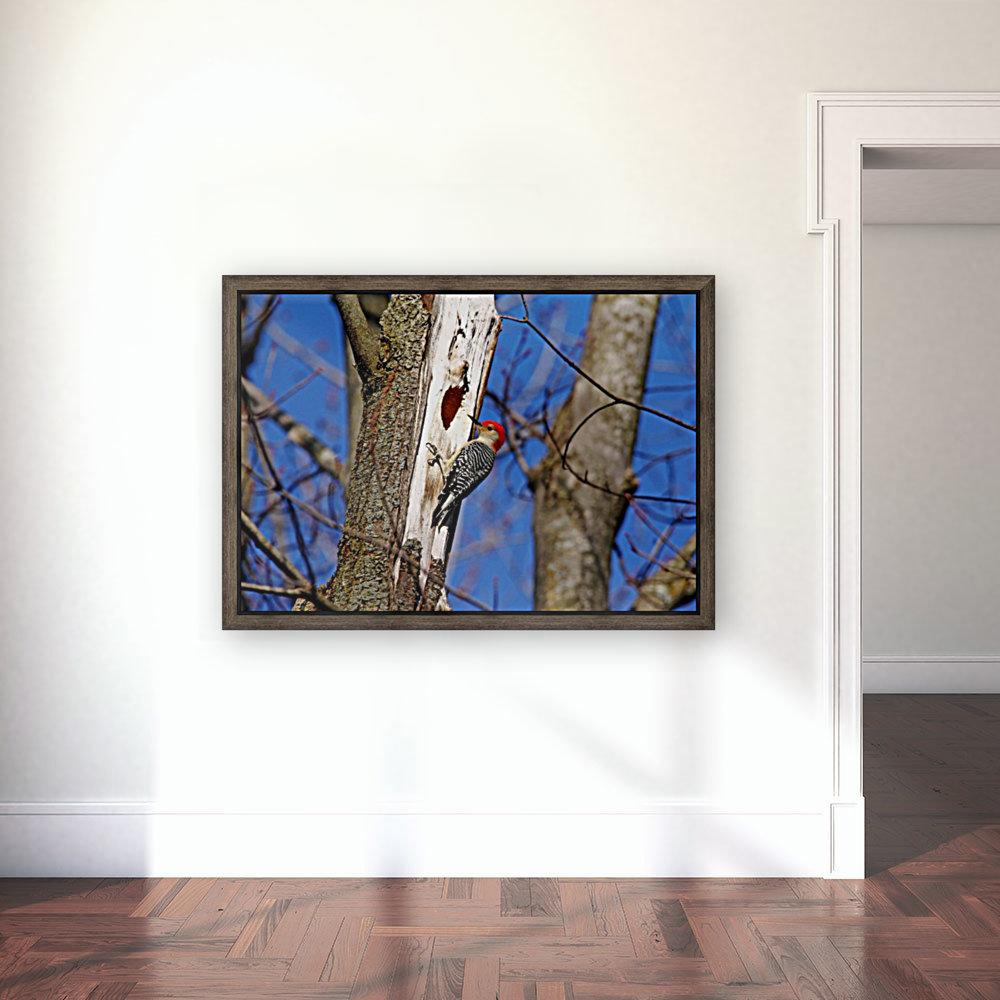 Red Bellied Woodpecker  Art