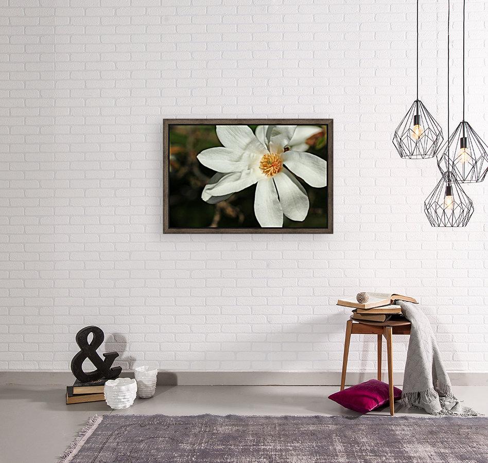 White Magnolia  Art