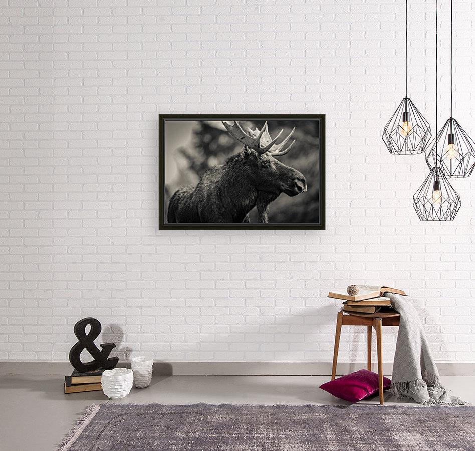 Moose Portrait - 2  Art