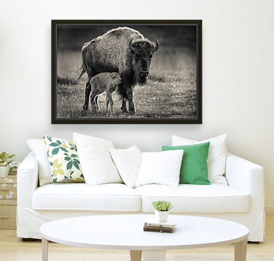 Bison love  Art