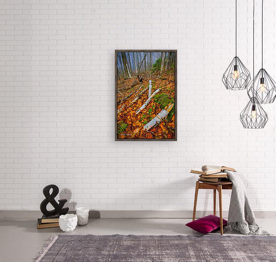 White Birch - APC-261  Art