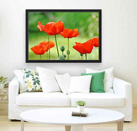 Morning Light Poppies  Art