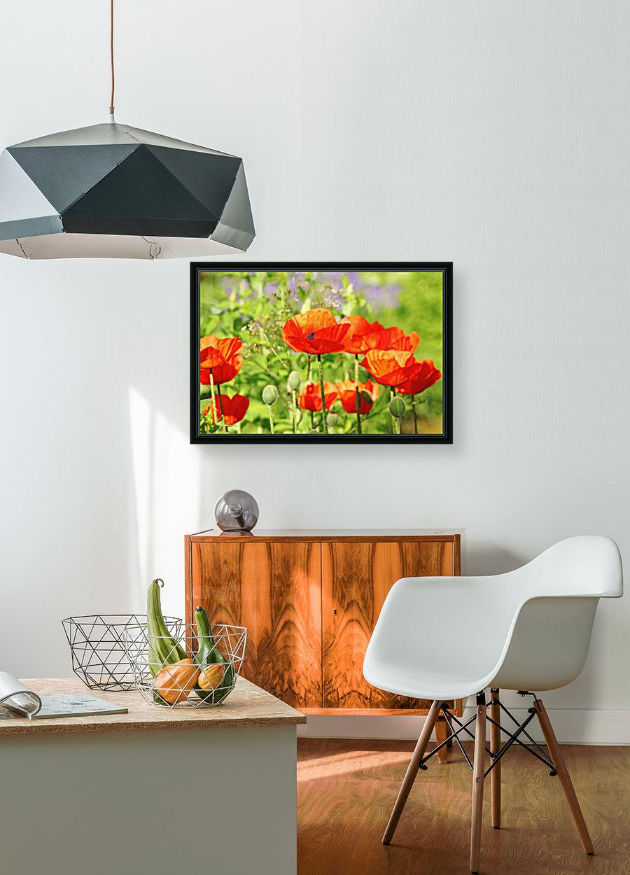 Poppy Garden  Art