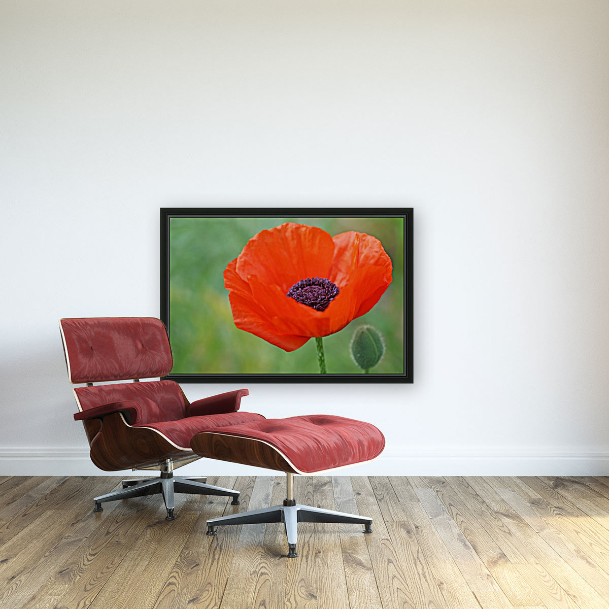 Poppy Red  Art
