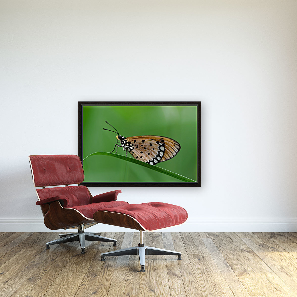 Butterfly with Floating Frame