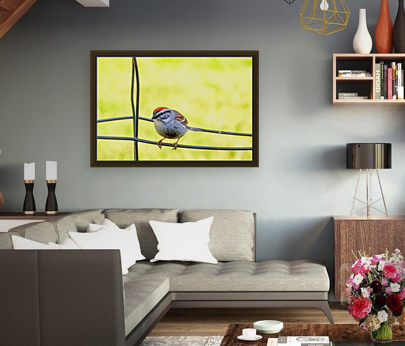 Sparrow on Wire  Art