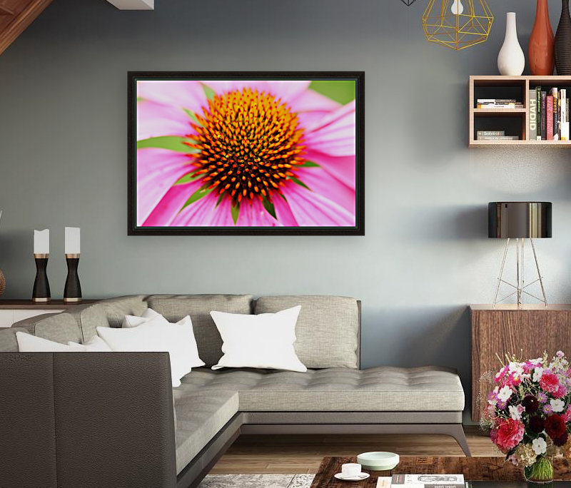 Hedgehog Coneflower  Art