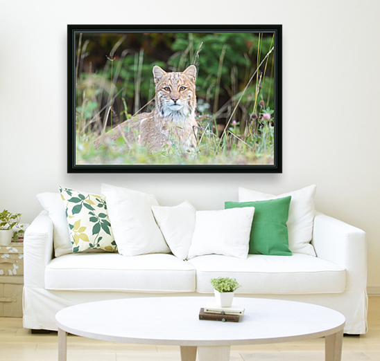 Wild Bobcat with Floating Frame