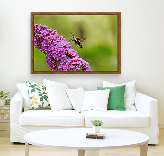 Hummingbird Moth Sipping Nectar  Art