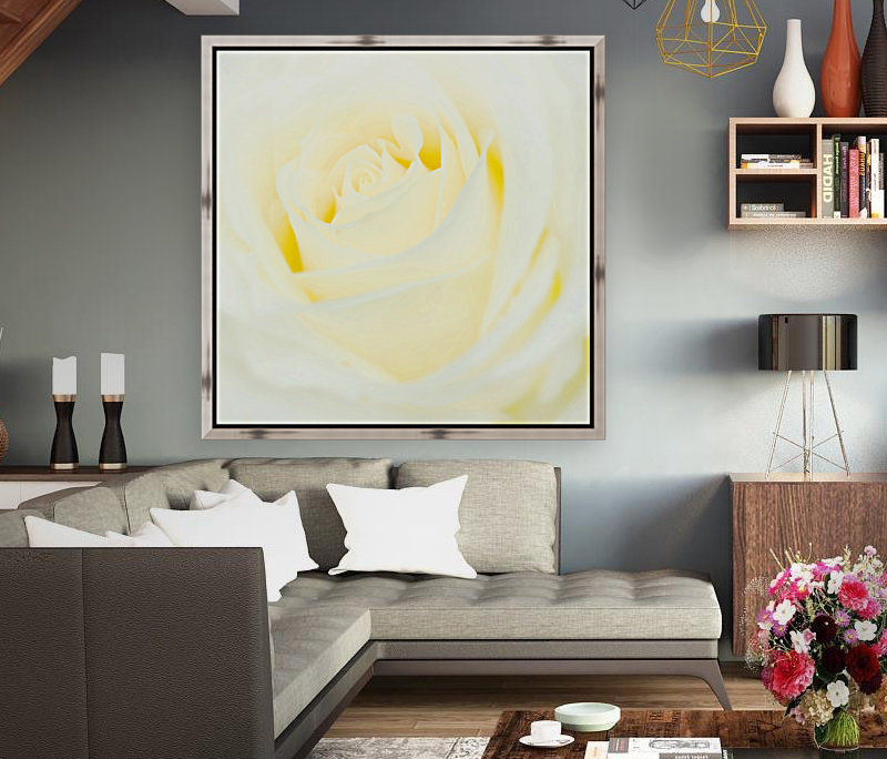 The White Rose with Floating Frame