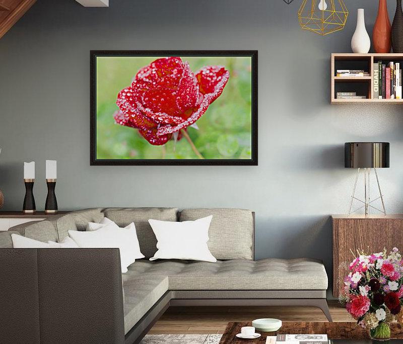 Raindrops and Roses  Art
