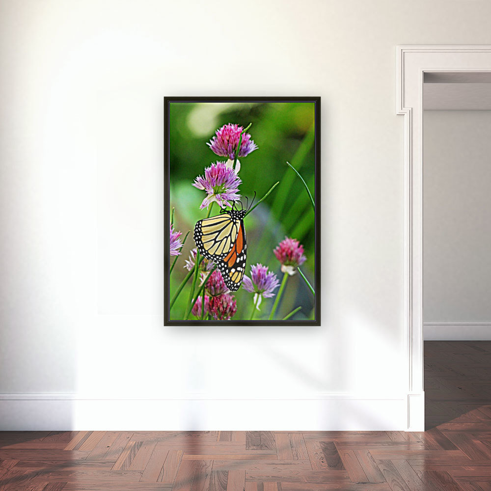 Monarch Butterfly On Chive Blooms  Art