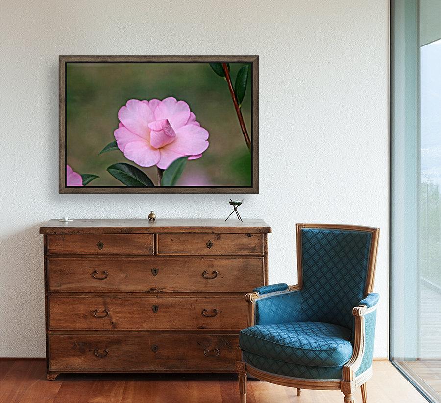 Pink Camellia  Art
