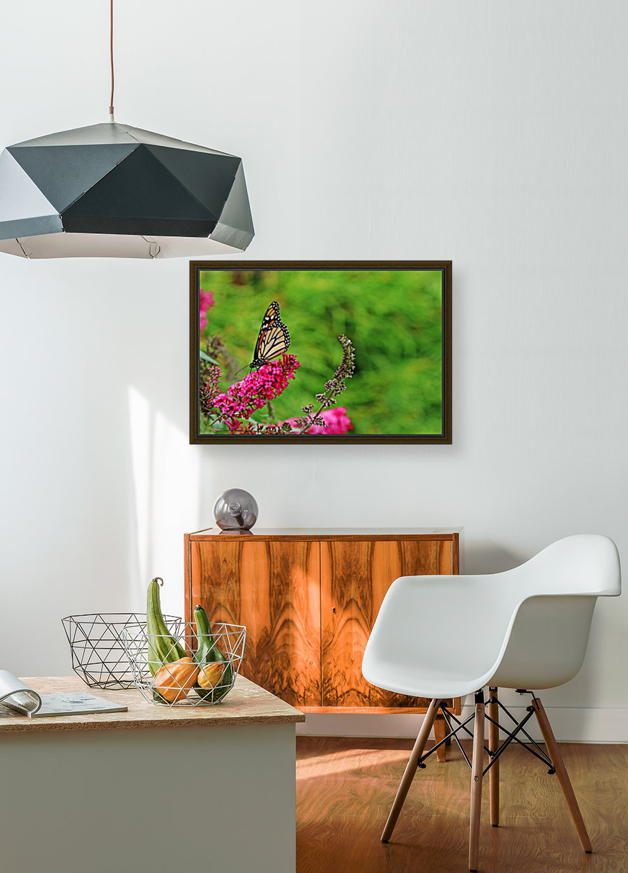 Monarch In The Garden with Floating Frame