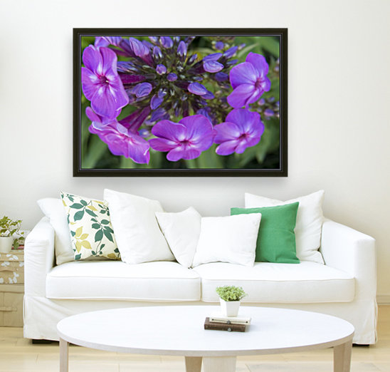 Purple Flower Blooming with Floating Frame
