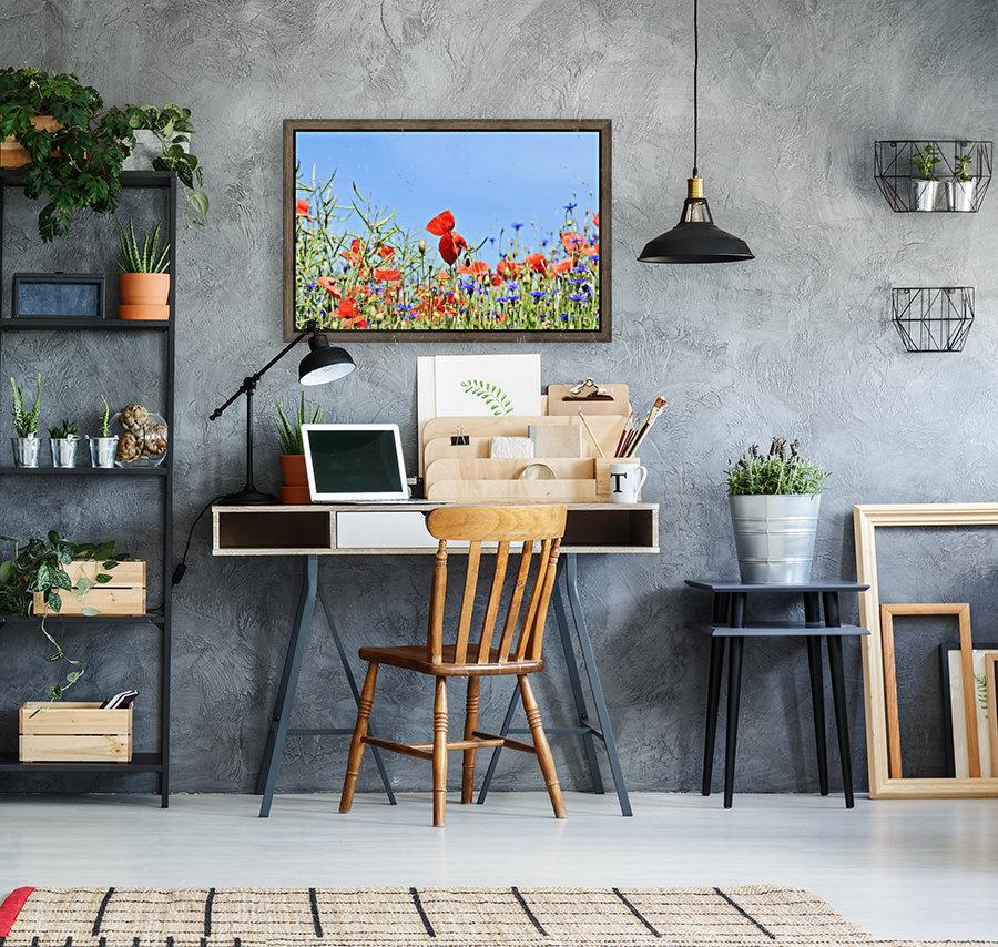 poppy, alpine cornflower, centaurea montana, flower, flower meadow, blossom, bloom, flora, plant, wild flower, garden, meadow, nature, field, petals, leaves, stems,  Art