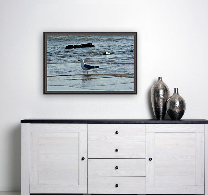 seagull 2  Art