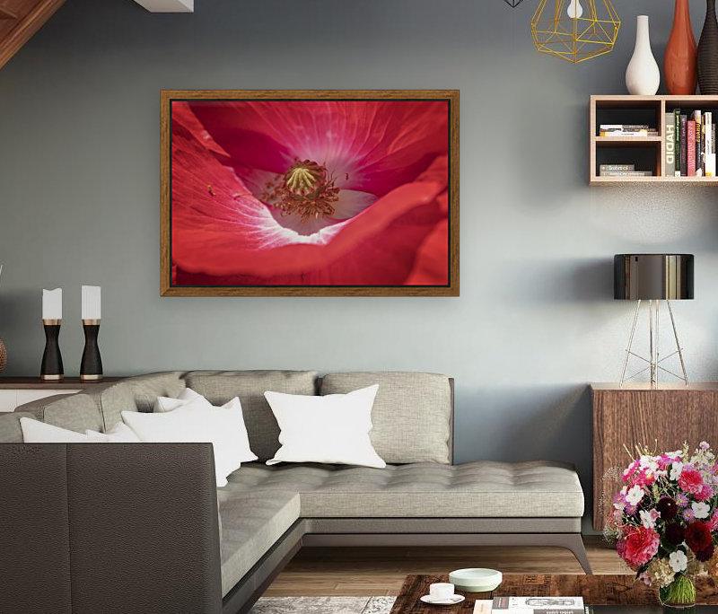 Poppy Flower  Art