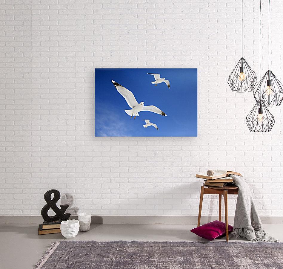Seagulls  Art