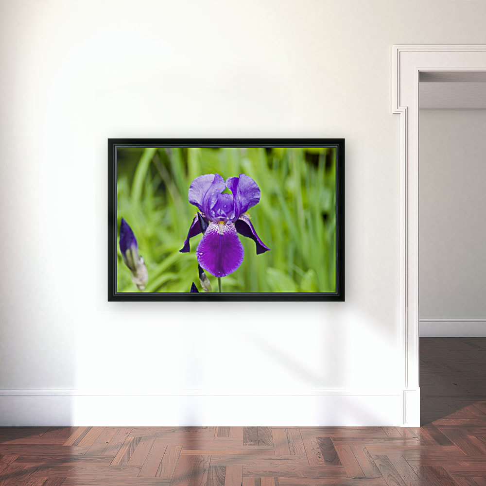 Purple Bearded Iris 6 with Floating Frame