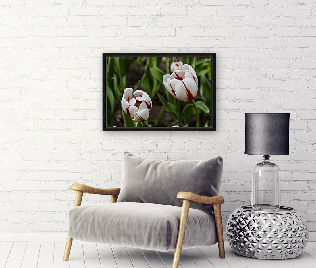 Canada 150 Tulips with Floating Frame