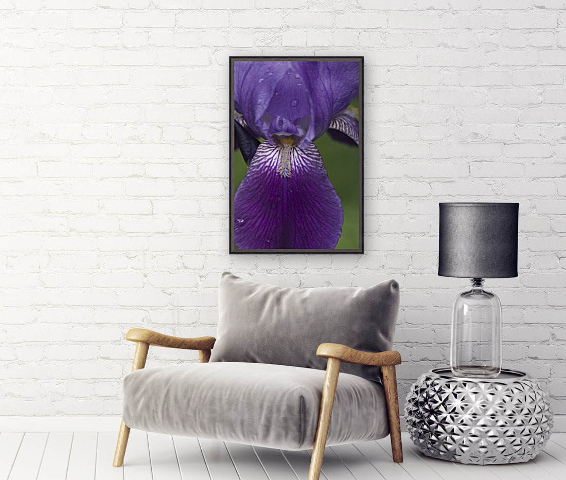 Purple Bearded Iris 3  Art