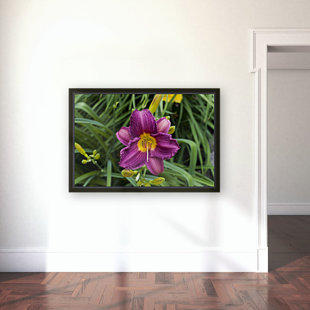 Purple Stealla Doro Day Lily with Floating Frame