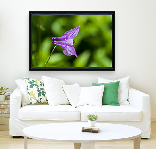 Purple Columbine 2 with Floating Frame