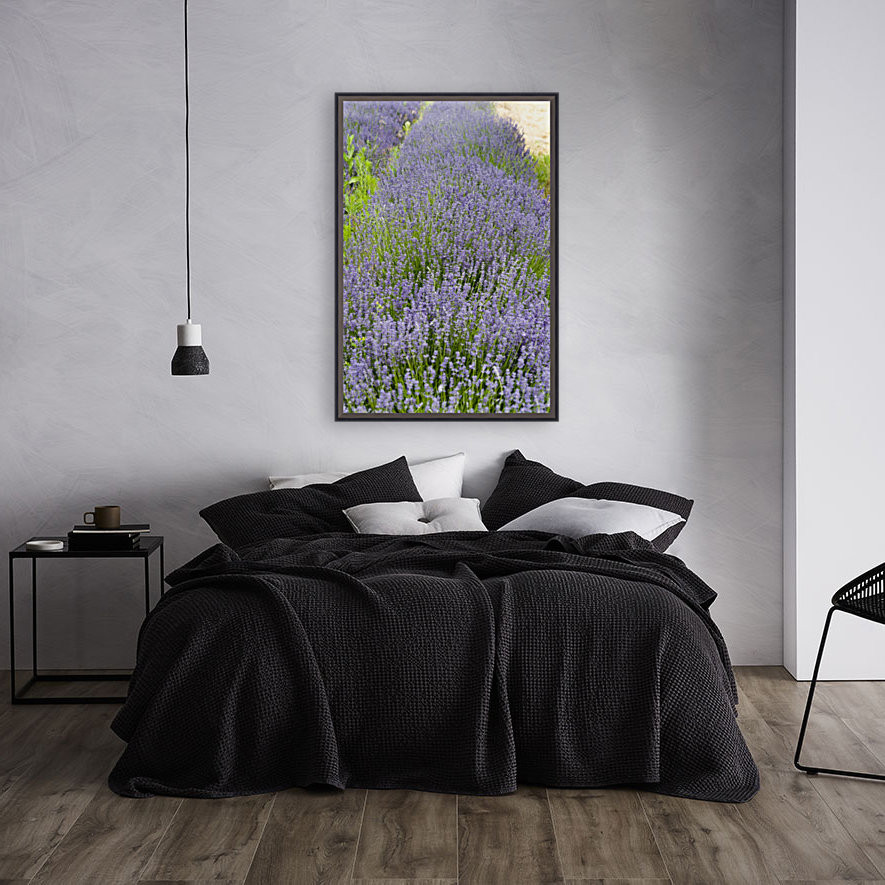 Lavender plants 7  Art