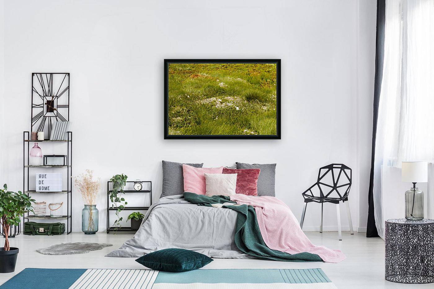 Cape Spears Flowers and vegetation 1  Art