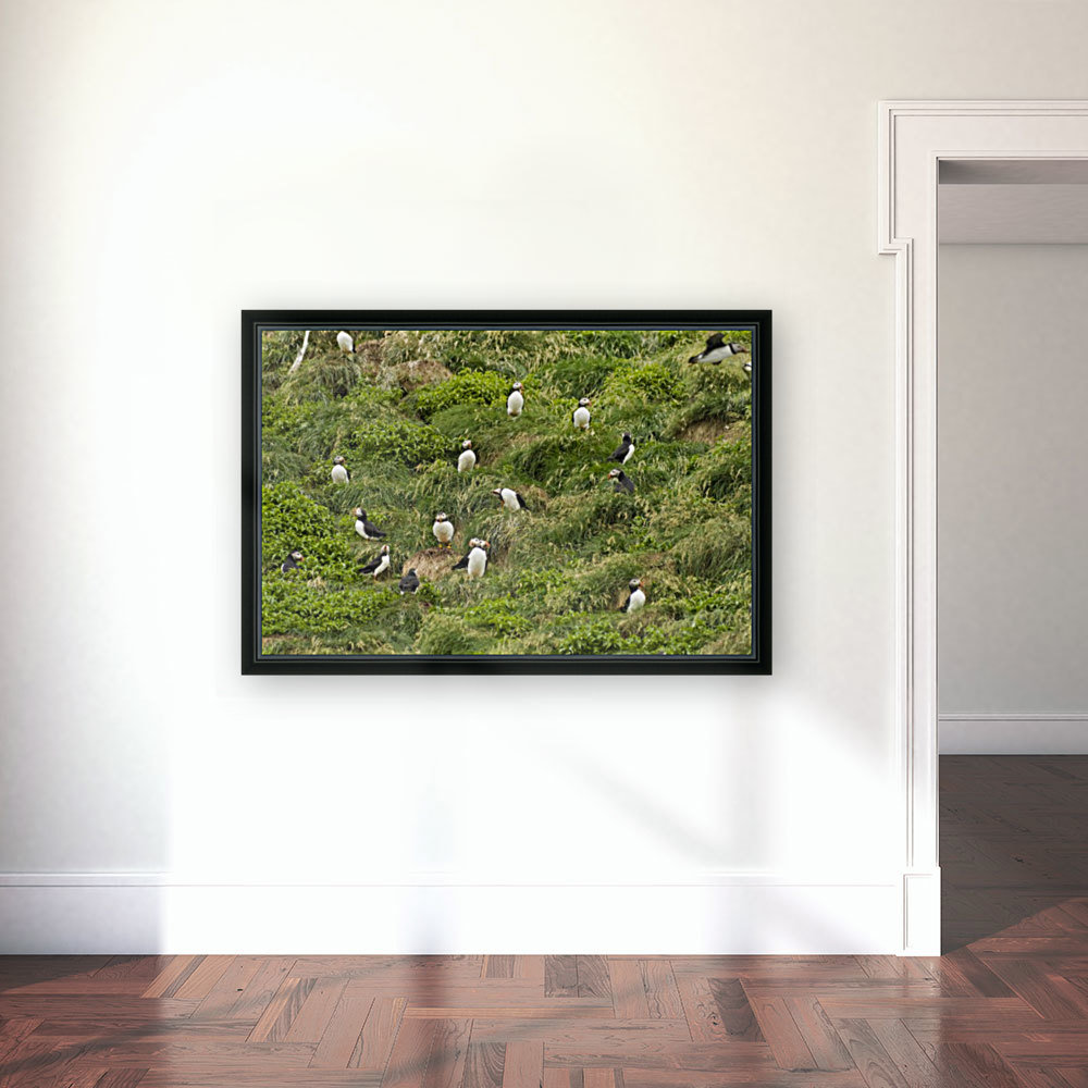 Atlantic Puffins 5 with Floating Frame