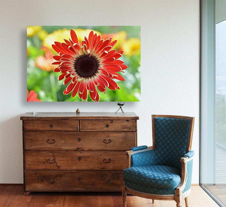 Red Flower Photograph  Art