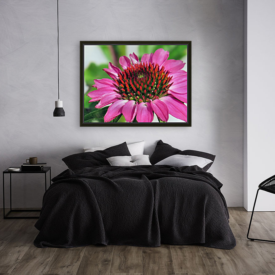 Pink coneflower  with Floating Frame
