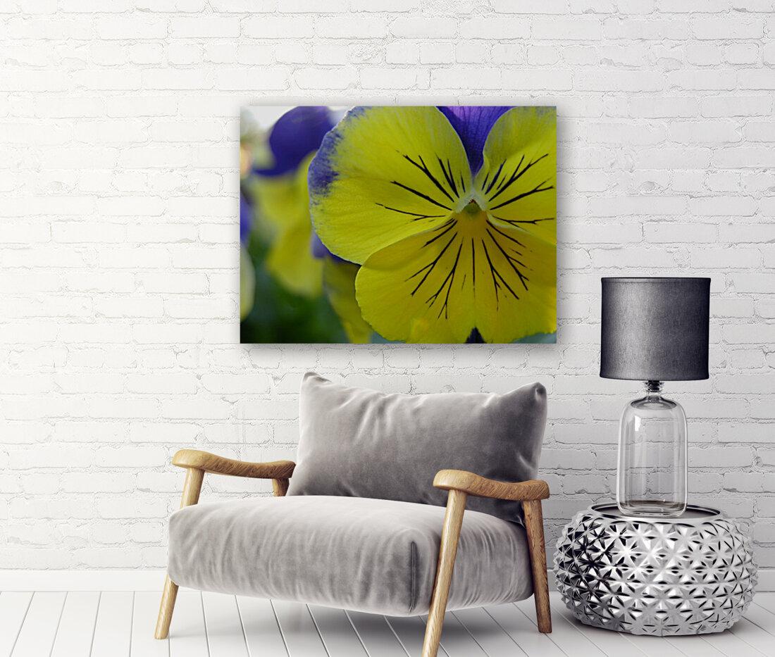 Yellow Pansy Photograph  Art