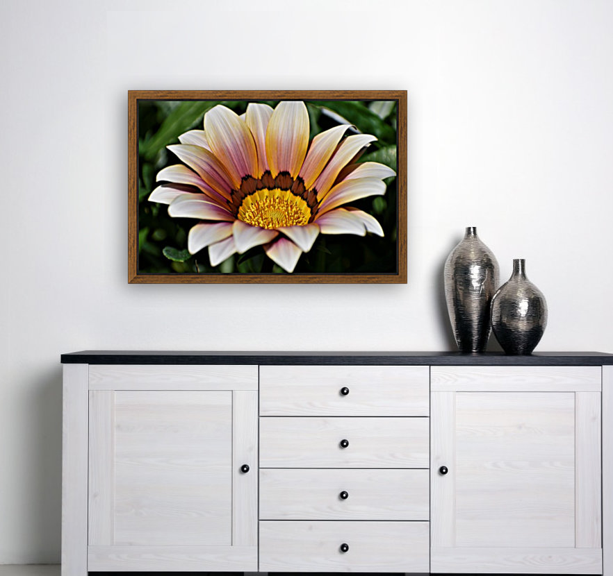 Gazania Flower Photograph in Orange and Pink  Art