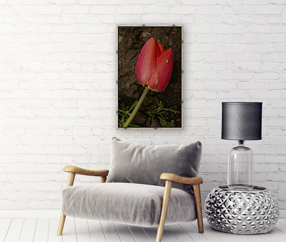 Fallen Beauty with Floating Frame
